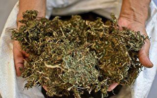 科州大麻合法化恶果频现  加州如何应对?