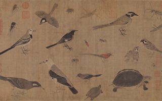 歷代最美畫稿《寫生珍禽圖卷》