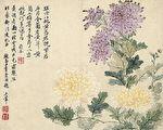 【文史】画中菊雅俗共赏 四君子菊之美