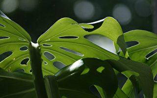 室内植物改善家庭健康五方面