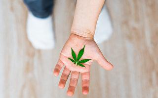 保护孩子不受大麻危害 家长须知