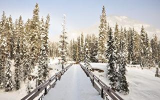 卑诗省遇暴风雪 萨省有降雪