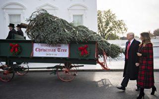 川普夫妇喜迎白宫圣诞树