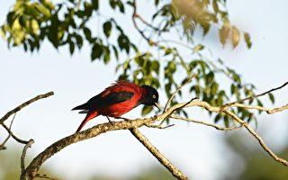 大农大富生态保育有成 60种鸟类栖息