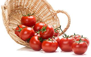 昆州劳动力短缺 番茄或涨至每公斤30元