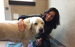 慈善星期二 硅谷人道协会吁关爱流浪动物