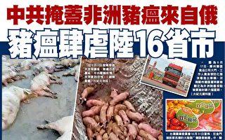 中共掩盖非洲猪瘟来源 疫情失控蔓延16省市