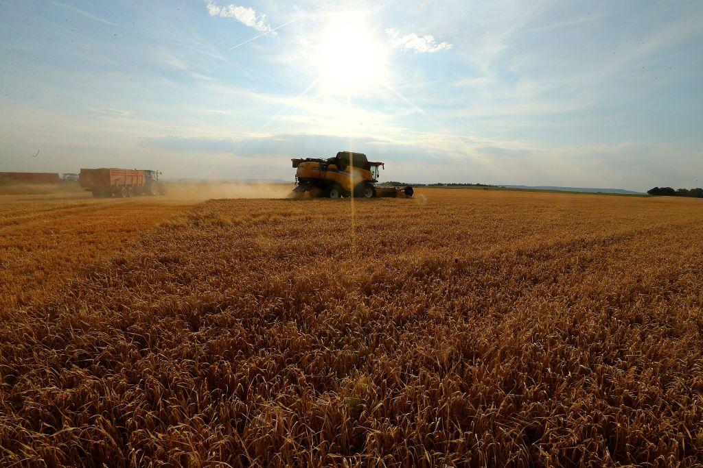 中共在此次反傾銷調查中列出了十家澳洲公司,但一些公司並未批量出口大麥至中國。(FRANCOIS NASCIMBENI/AFP/Getty Images)