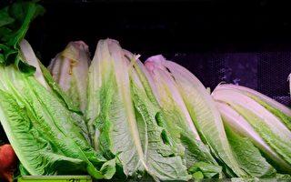 美11州现大肠杆菌疫情CDC吁别吃罗马生菜