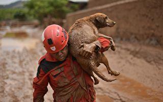 消防員救援狗狗 有出乎意外的美麗收穫