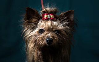 俄男遛狗沒用狗繩 小狗被強風吹到幾公里外