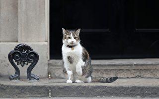 """湿冷雨天 暖警替英首相府""""第一猫""""开门"""