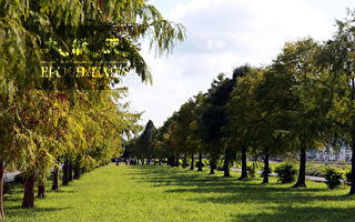 安农溪落羽松秘境将增添景观设施
