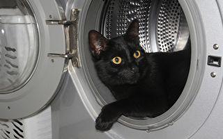 猫咪真的很奇怪!盘点喵星人闹出的笑话