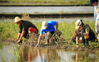 """罗东处里山出任务  跟农夫实践""""水田就是栖地"""""""
