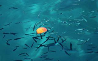 """鱼能""""起死回生""""大翻鱼肚放回水中马上游走"""