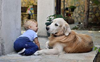 黃金獵犬第一次見寶寶 溫柔分享玩具小襪子