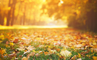 落叶环保 居民不必费力清理草坪