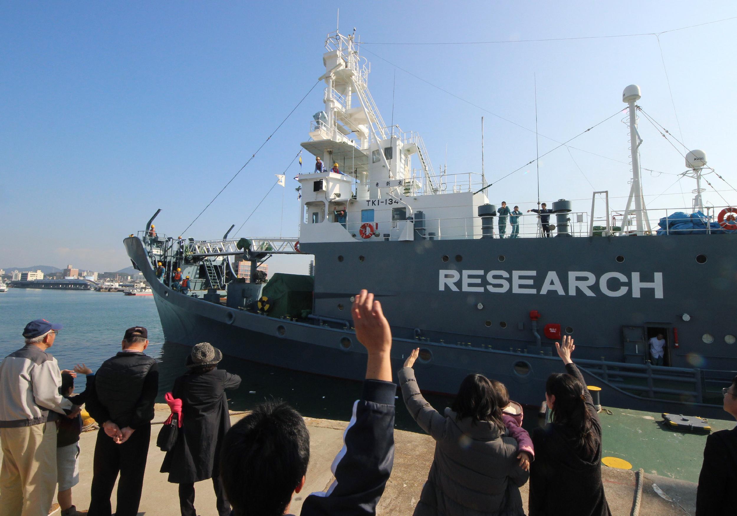 日本政府在12月26日宣佈退出國際捕鯨委員會,以便在明年7月恢復商業捕鯨。圖為2015年12月1日,日本一艘捕鯨船離開山口縣的港口。(JIJI PRESS / AFP)