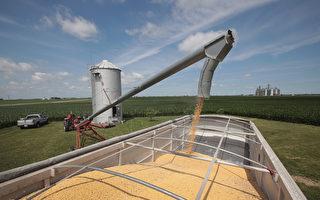 中国购58.5万吨美国大豆 4月份来最大宗