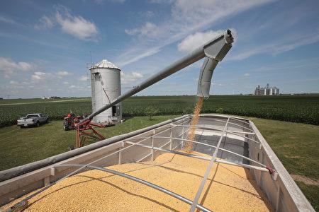 来自中方官员、美国官员以及知情人士的消息均显示,中国近期内将重新进口美国大豆,最快将于今年年底前宣布。图为示意图。