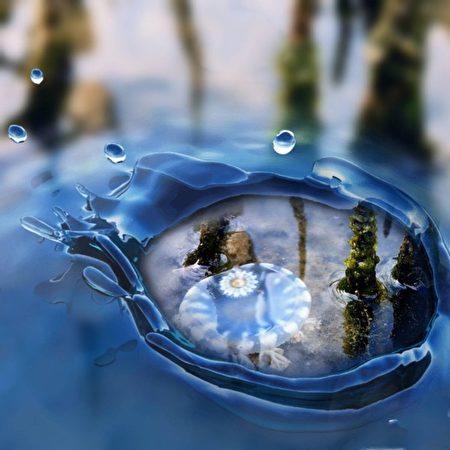 組圖:台灣首見「藍色仙后」水母 遊客驚艷