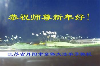 江蘇省鎮江市丹陽市開放的上百朵優曇婆羅花的部份照片