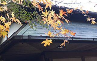 京都風致尋唐風古韻 處處寺廟瓣瓣心香