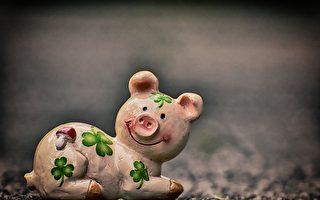 猪八戒戴花怎回事?妙趣歇后语
