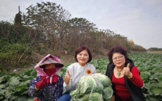 企業帶員工採購高麗菜 體恤農民辛苦