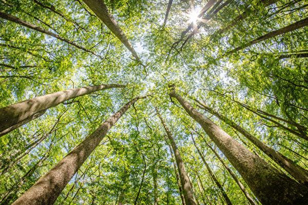 """日本进行半世纪的造林试验 种出""""麦田圈"""""""
