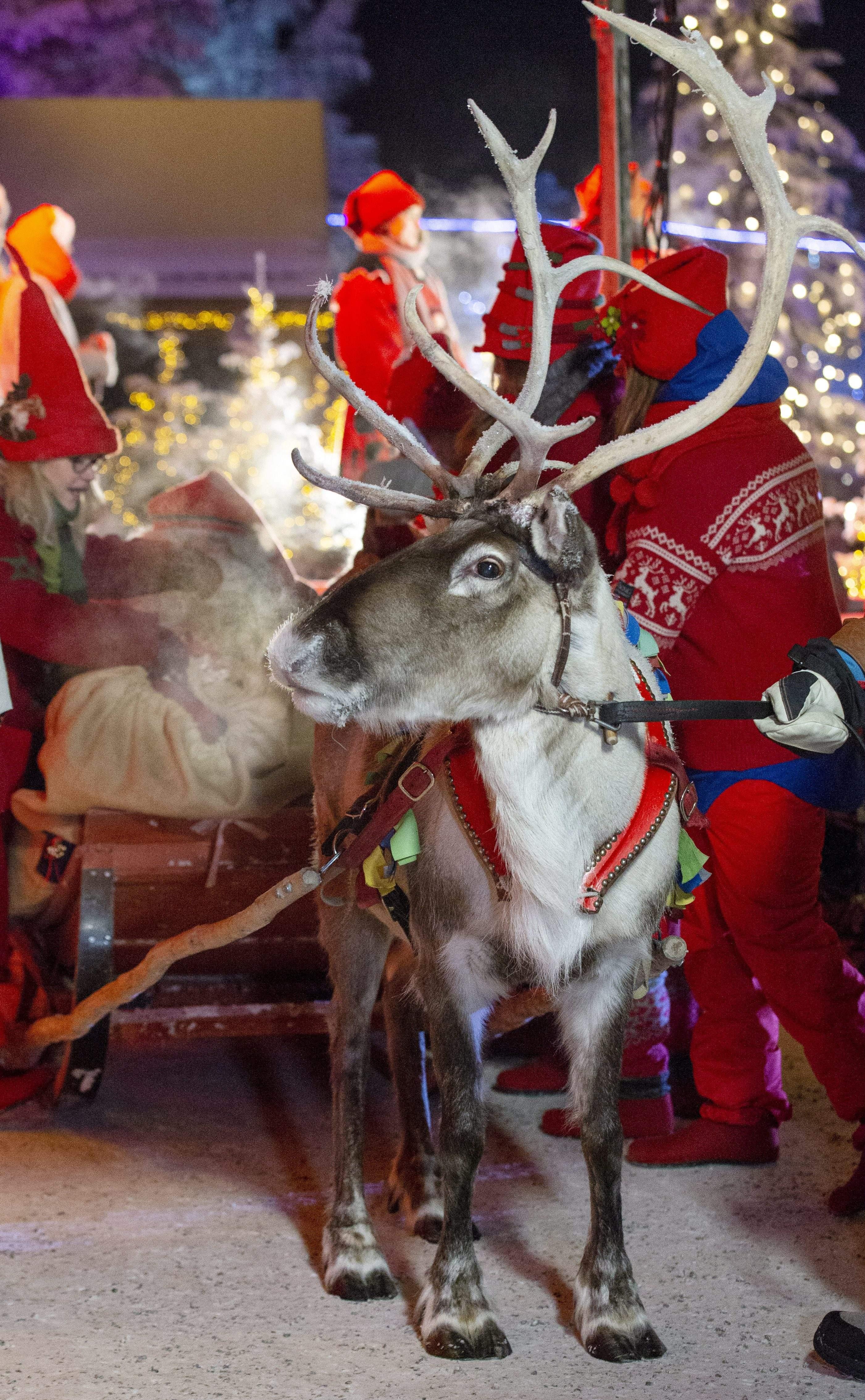 聖誕老人12月23日晚已從他在芬蘭北部拉普蘭(Lapland)的家鄉出發,展開浩大的全球送禮行程,為世界各地的小朋友送去祝福。(LAURA HAAPAMAKI/AFP/Getty Images)