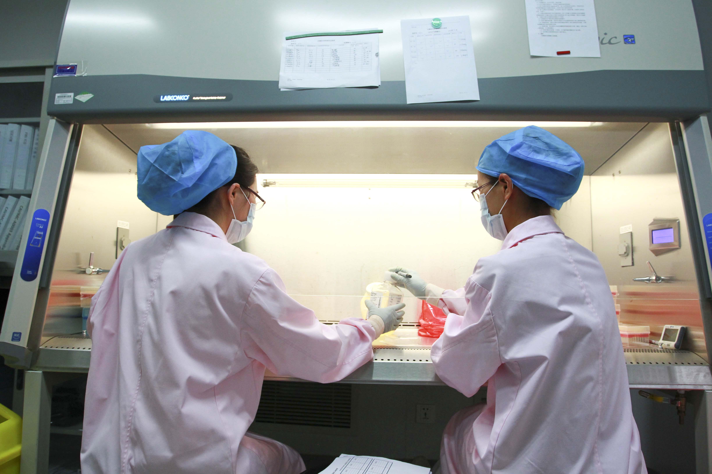 中國基因編輯疑雲重重 海外科學界震驚
