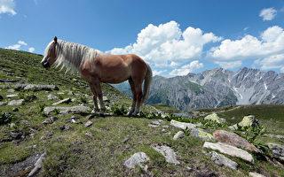 组图:这匹马有卷曲金色长发 令粉丝倾倒