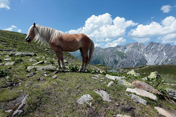 組圖:這匹馬有捲曲金色長髮 令粉絲傾倒