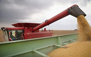 中方允诺大幅增加农产品进口 美农民谢川普