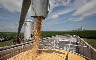 貿易戰升級 神祕買家購買大批美國大豆
