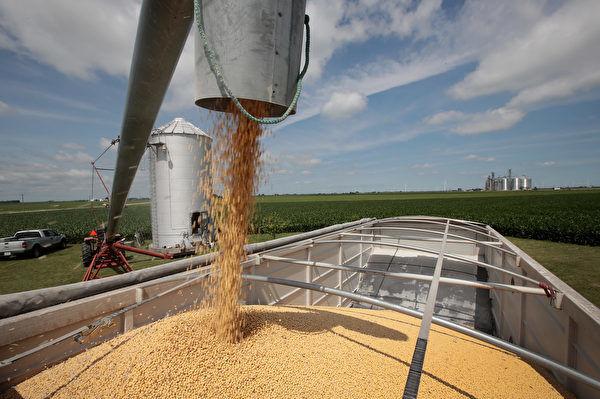 贸易战升级 神秘买家购买大批美国大豆