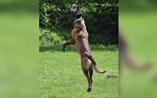 叫我第一名!爆发力十足 狗狗是超级运动员