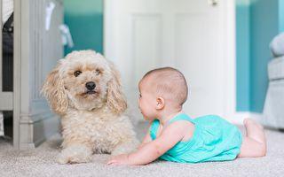 狗狗忠心守护小伙伴 你肯定也会想养一只!