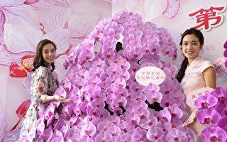 香港新春花展 巨型兰花瀑布最抢眼