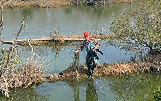 鰲鼓濕地鸕鶿誤纏漁網 立即救援順利野放