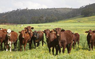 西澳農田外國人擁有率全澳最高