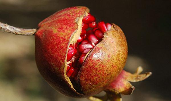 紅石榴對抑制病菌感染,防止慢性發炎有很好的效果。