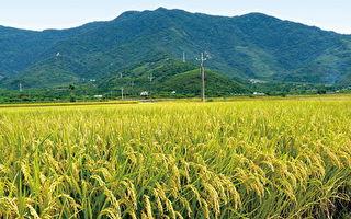108年稻作申報至2月1日截止