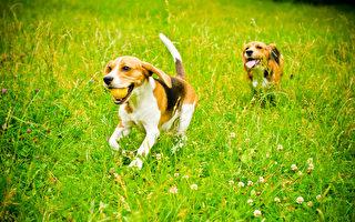 為何小狗會挖土?如何使牠們停下來?
