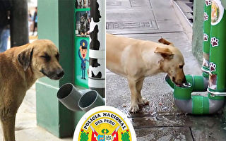 不忍流浪猫狗挨饿 秘鲁多地警方建自助餐饮站
