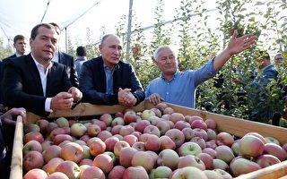 19吨中国苹果受污染 俄罗斯禁止进口