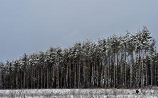 俄政府或禁止中國人在俄收購木材