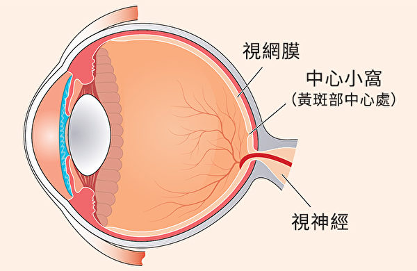 不同护眼营养素作用于眼睛的不同部位。